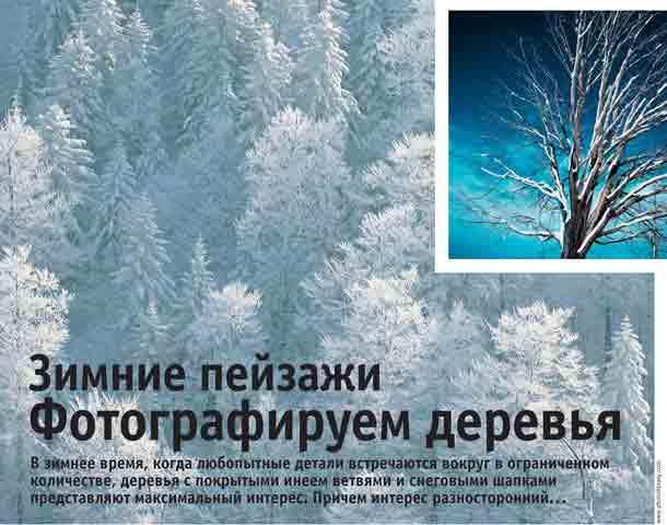 Фотографируем зимние деревья