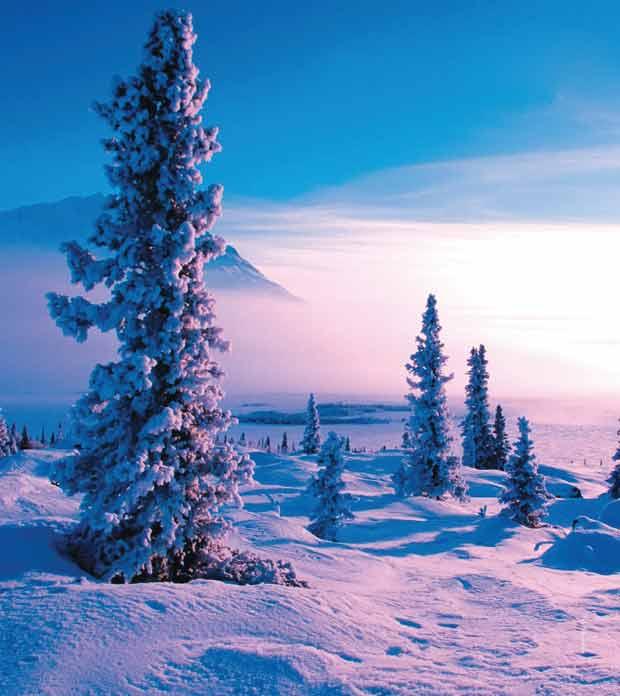 Снежная сказка Зимний пейзаж
