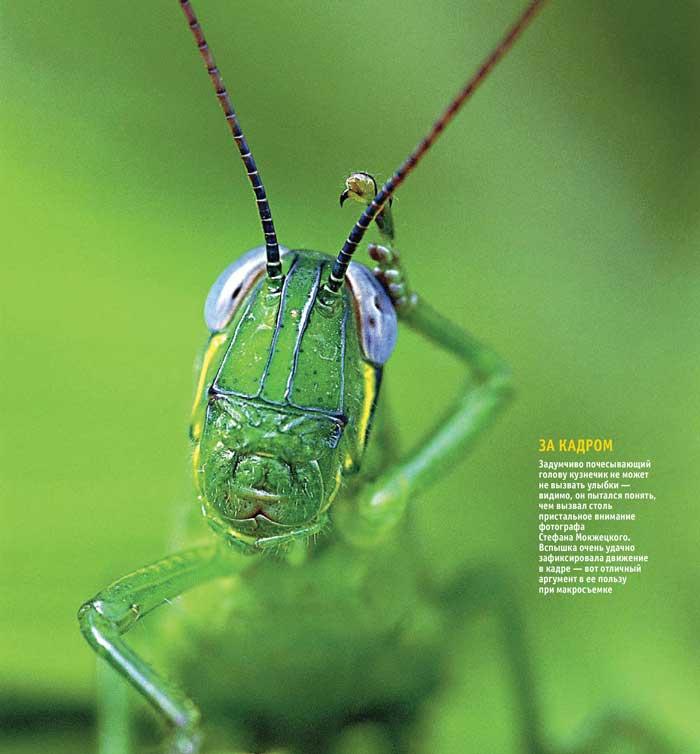 Макро, насекомые, съёмка со вспышкой