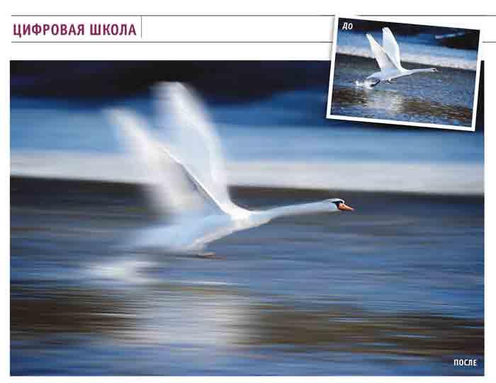Как создать движение на фотографии? лебедь, птица