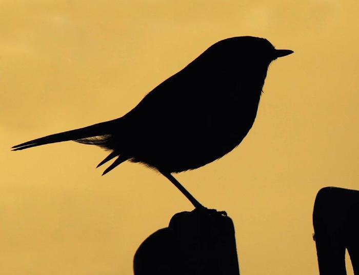Птица, контур