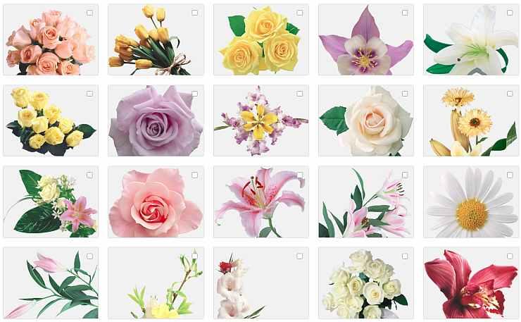 Цветы, клипарт на прозрачном фоне