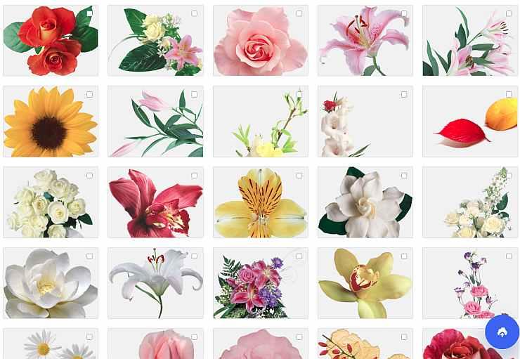 Цветы, клипарт для фотокниги с прозрачным фоном